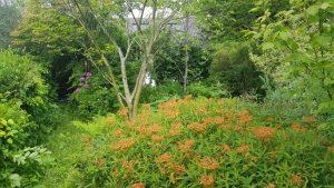 The Woodland Garden, Townfoot